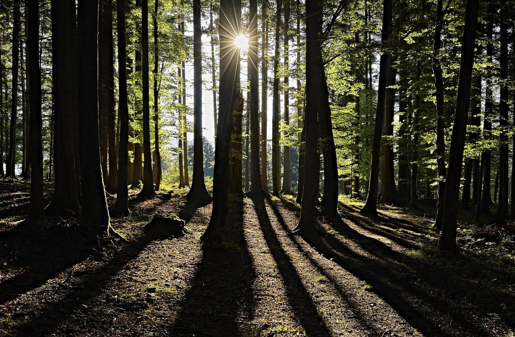 Die Sonne bricht durch die Bäume im Wald am Tegernsee, © www.bayern.by - Gert Krautbauer