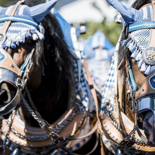 Pferdeschmuck, © Der Tegernsee, Hansi Heckmair