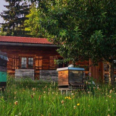 Lehrbienenstand Gmund Bild 1, © DER TEGERNSEE I.Munstermann