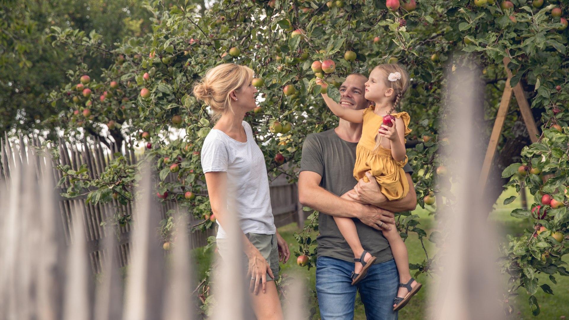 Familie beim Apfelpflücken, © Hansi Heckmair