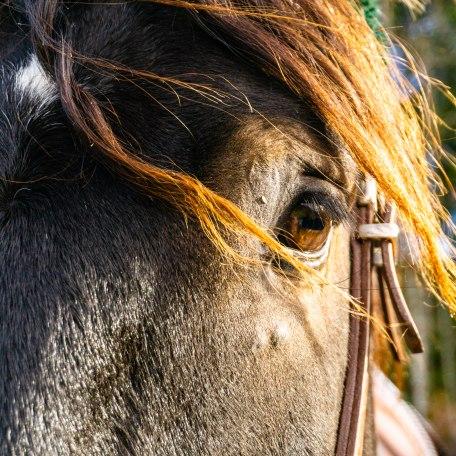Pferd, © Der Tegernsee, Stefanie Pfeiler