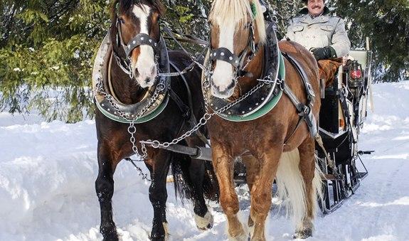 fischerwebers_pferdekutschenfahrten_bo_1