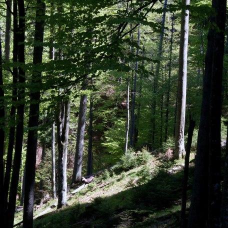 im Bergwald, © im-web.de/ Tourist-Information Kreuth