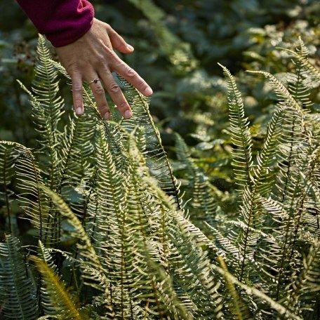 Der grüne Farn im Wald gleitet sanft durch die Finger, © www.bayern.by - Gert Krautbauer