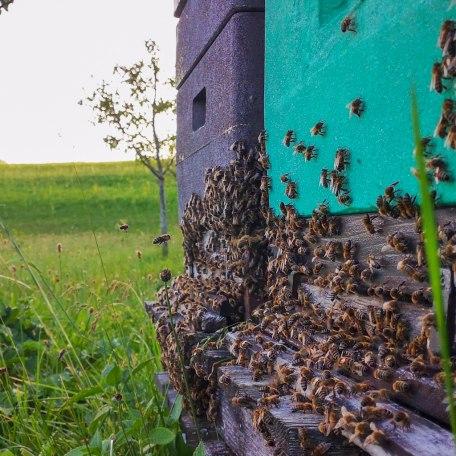 Lehrbienenstand Gmund Bild 2, © DER TEGERNSEE I.Munstermann