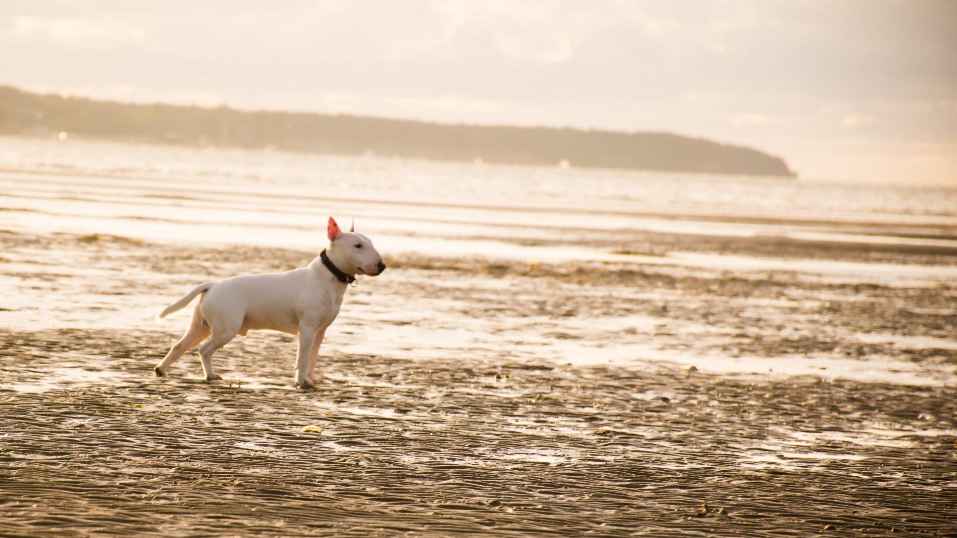 Hund am Strand, © Photo by Daniil Lebedev on Unsplash