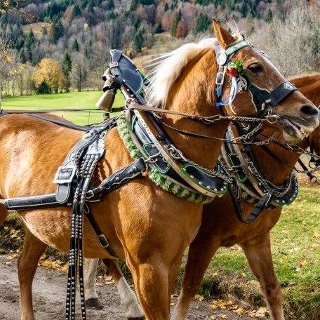 Pferdegespann bei der Leonhardifahrt, © Der Tegernsee, Stefanie Pfeiler