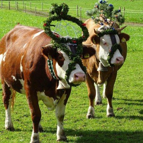Almabtrieb des Jungviehs, © im-web.de/ Tourist-Information Kreuth