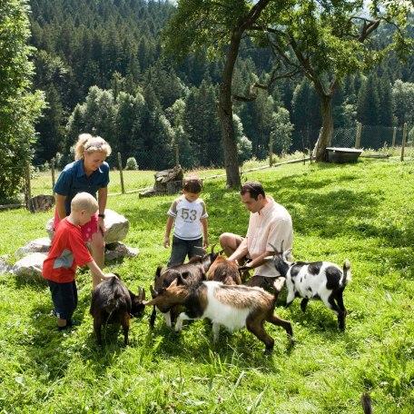 Kinderferienprogramm - Streichelzoo, © Bernd Ritschel