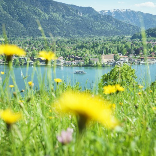 Eine wundervolle Blühwiese oberhalb des Tegernsees im strahlenden Sonnenschein, © Dietmar Denger