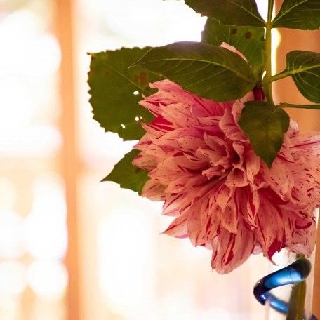 kleiner Blumengruß, © im-web.de/ Tourist Information Tegernsee