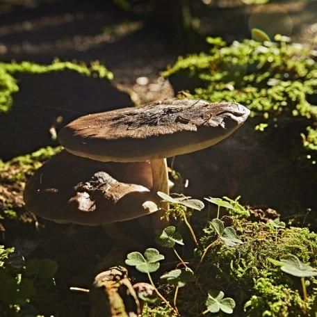Ein Schwammerl steht im Walde, © www.bayern.by - Gert Krautbauer